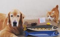 เมื่อน้องหมาอยากอุปการะแมวจรจัด!
