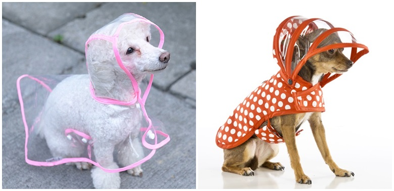 รวมภาพแฟชั่นชุดกันฝนน้องหมา น่ารักฟรุ้งฟริ้ง