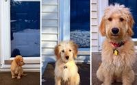 แชะภาพ! Then & Now ของเหล่าน้องหมา บอกเลยแต่ละตัวมาไกลมาก