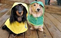 5 วิธีป้องกันไม่ให้น้องหมาป่วยง่าย ๆ ในหน้าฝน !