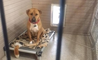 เจ้า Bear สุนัขตัวนี้นั่งคอตกในศูนย์พักพิงฯ รอบ้านใหม่มานานกว่า 2 ปีแล้ว !!