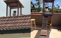 เจ้าของทำเพิงบนหลังคาให้เจ้าตูบ หลังชอบปีนขึ้นไปชมวิวจากมุมสูง !!