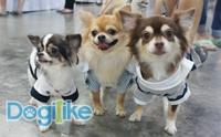 พาทัวร์งาน Thailand International Dog Show 2017 ตอนที่ 2