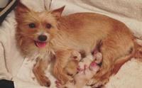 โชคชะตาเป็นใจ! เมื่อลูกหมาที่ถูกโยนออกจากรถได้มาพบแม่หมาที่เพิ่งเสียลูกไป