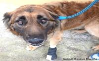 ชมคลิป! เมื่อสุนัขด้รับความรักเป็นครั้งแรก หลังจากถูกล่ามไว้นานกว่า 8 ปี