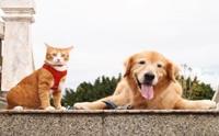 หมาแมวใครว่าอยู่ด้วยกันไม่ได้ ... มาดูคู่ซี้ต่างสายพันธุ์ที่ใครเห็นก็ต้องหลงรัก