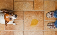 รู้ทันโรคติดเชื้อทางเดินปัสสาวะในสุนัข