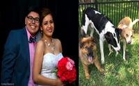 น่ารักสุดๆ! คู่สามีภรรยารับอุปการะน้องหมาทุก ๆ วันครบรอบแต่งงาน