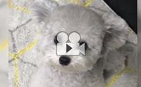 นี่ตุ๊กตาหมีย่อส่วนหรือเปล่าเนี่ย !!