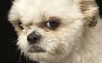 5 สัญญาณที่บอกว่า น้องหมามั่นใจในตัวเองจนนิสัยเสีย!!