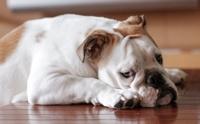ชวนพ่อแม่หมามาเช็กสัญญาณบอกความกังวลของลูก ๆ สี่ขากัน