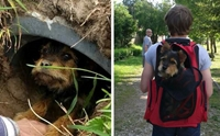 คู่รักพบเจ้าตูบบาดเจ็บแอบหลบอยู่ในท่อน้ำ ก่อนรับเลี้ยงเป็นสุนัขสุดรัก !