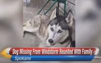 สุนัขพลัดหลงกับเจ้าของช่วงภัยพิบัติกว่า 2 ปี วันนี้ฝันเป็นจริงแล้ว !