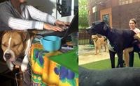 รวมภาพฮาๆ เมื่อน้องหมาไซส์บิ๊กคิดว่าตัวเองตัวเล็กนิดเดียว !