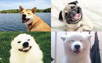 รวมภาพหมายิ้มตลกๆ ที่เห็นแล้วต้องอมยิ้ม