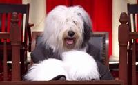 ต้องอ่าน!! กฎหมายที่ผู้เลี้ยงสุนัขต้องรู้