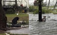 ดราม่าล่ามหมาผูกเสาทิ้งจมน้ำ ช่วงเฮอร์ริเคนถล่มเท็กซัส มะกันเดือด ทำได้ไง?