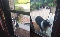 ทุกวันสุนัขตัวนี้จะวิ่งมานั่งรอหน้าบ้าน เพื่อชวนเพื่อนสีขาออกไปวิ่งเล่น !
