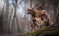 ช่างภาพฮังการีเผยภาพสวยของน้องหมาสุดรัก งานนี้ประทับใจคนทั่วโลก !