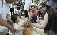 สนามบินในแคนาดามีน้องหมาบำบัด ช่วยคลายเครียดให้กับนักท่องเที่ยว !
