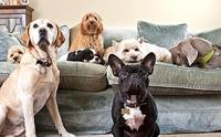 สยบทุกปัญหากับ 10 ทริคการทำความสะอาดที่คนเลี้ยงหมาจำเป็นต้องรู้ !