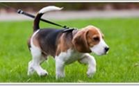 ฝึกน้องหมาให้ขับถ่ายตามหมาโต