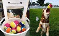 ครอบครัวมะกันใช้ลูกเทนนิสปันสุขให้สุนัขไร้บ้าน เพื่อระลึกถึงตูบที่จากไป !