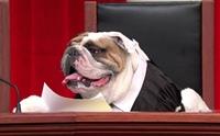 แบบนี้ก็มีด้วย!! กฎหมายแปลก ๆ ที่เกี่ยวกับสุนัขทั่วโลก