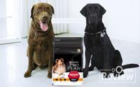 ดูแลสุนัขที่คุณรักให้แข็งแรงด้วยนวัตกรรมอาหารสุนัขสูตรใหม่ PROPLAN OPTINUTRITION