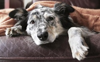 แจกวิธีการดูแลสุนัขป่วยโรคไตวายเรื้อรัง