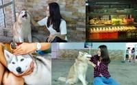 Dogilike Review : เปิดแล้ว! คาเฟ่น้องหมาที่แรกของพม่า