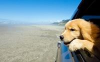 จัดอันดับ 5 สถานที่ในไทยสุดฮิตที่น่าพาน้องหมาไปเที่ยว !