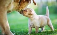 5 สมดุลที่ต้องปรับให้ลูกหมา เพื่อให้โตไปเป็นหมานิสัยดี
