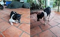 อาสาสมัครซอยด็อกเวียดนาม เจรจา 'ป้าไล่ฟันขาหมา' หวังพารักษา หาบ้านใหม่