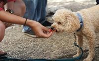 จัดอันดับ 5 สิ่งที่คนรักหมาทำแล้วเสี่ยงเกิดดราม่า!