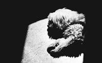 การผ่าชันสูตรซากน้องหมาที่ตาย คุณหมอเขาทำกันอย่างไร