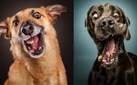 เรื่องกินเรื่องใหญ่! รวมภาพใบหน้าน้องหมาเวลาได้กินขนมอร่อย