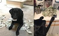 ฉลาดสุดๆ! เมื่อน้องหมาชอบเก็บเงินเพื่อนำมาแลกกับขนม