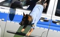 สวัสดิการอย่างดี! กรุงเบอร์ลินจัดเบี้ยบำนาญให้ สุนัขตำรวจ 3.4 ล้านบาท