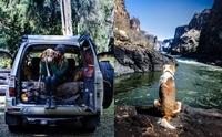 รักเปลี่ยนชีวิต! สุนัขขี้กลัวจากแอฟริกา วันนี้กลายเป็นสุนัขที่ชื่นชอบการผจญภัย