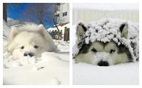 ภาพสุดน่ารักๆ เมื่อปล่อยน้องหมาไว้กับหิมะ
