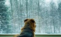 หน้าหนาวทำให้น้องหมาซึมเศร้าได้จริงเหรอ?