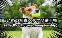 เมื่อชาวญี่ปุ่นพร้อมใจติดแฮชแท็ก #BadDogPictureChampionship ให้น้องหมาตัวเอง