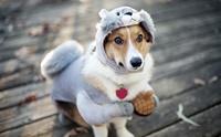 จัดอันดับ 5 สิ่งที่ทาสน้องหมาชอบทำให้หน้าหนาว