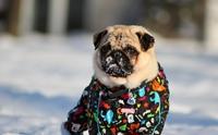 หนาวนี้มาดูแลให้น้องหมาร่างกายแข็งแรงด้วยวิธีง่าย ๆ กันเถอะ