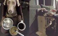 เรื่องราว เจ้า Tink สุนัขป่วยที่ต้องนั่งกินอาหารด้วยเก้าอี้พิเศษ !