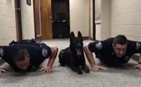ไม่ดูถือว่าพลาด! คลิปสุนัขตำรวจโชว์วิดพื้นเตรียมพร้อมปฏิบัติหน้าที่