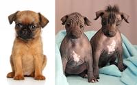 จัดอันดับ 5 สายพันธุ์น้องหมาที่มีใบหน้าตลกตั้งแต่เกิด