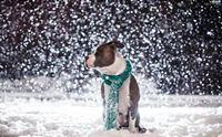 รู้จัก 4 หน้าที่สำคัญของน้องหมาในดินแดนหิมะ