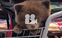 น่ารักขนาดนี้ หมาหรือหมีกันแน่นะ !